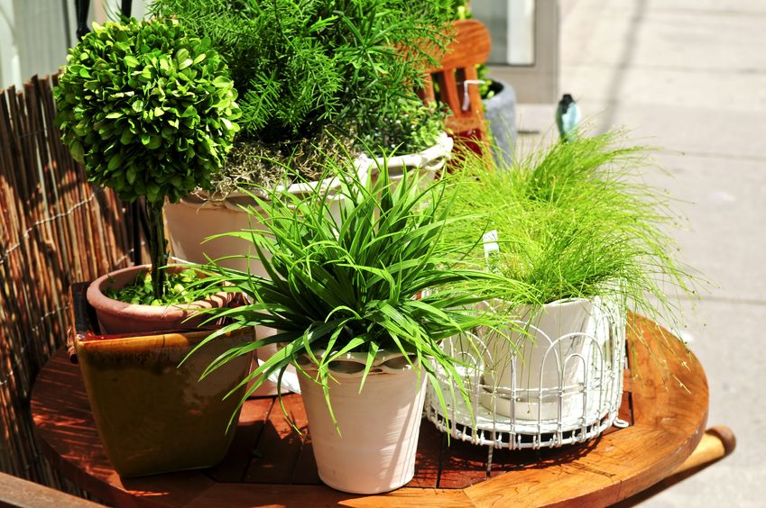Why indoor plants are good for business