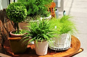 3102175 - potted green plants on wooden patio table